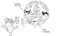 neurosciences apprendre la musique